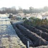Frosty Allotments