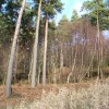 Woods near Sheetland