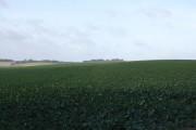 Boveridge Farm looking north