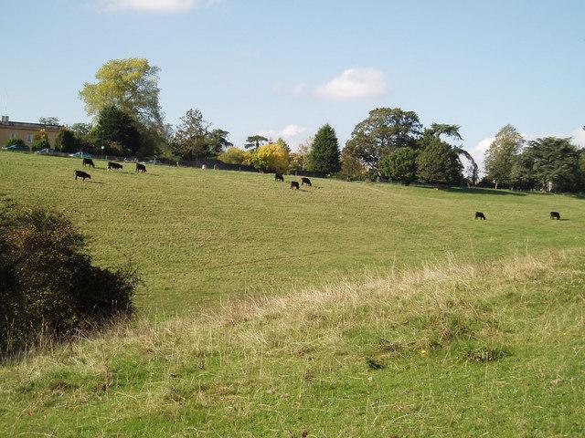 Frenchay Common