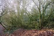 Potash Wood