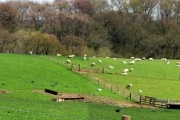 Beenham: A Panaromic View of Farmland north of Shrub Wood