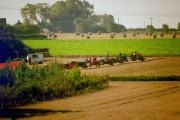 Vintage Tractor Meet