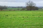 Farmland near Dunsters Plantation