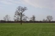 Farmland with trees near Uffington