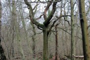 In Fifty Acre Wood