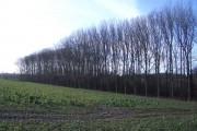 Woodland Edge Northeast of Farndish