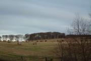 Clerkhill Wood