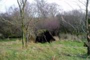 Old woodland