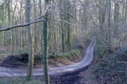 Whiteway Wood