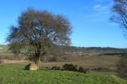 Ken-Dee Farmland