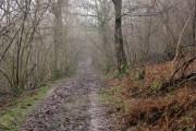 In Saxonbury Wood