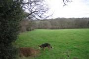 Fields Near Lewcombe Manor