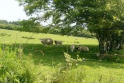 Sheep, Ballymeanochglen Farm track, Kildonan, Arran