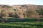 Madam's Grove near Waterlane
