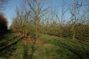 Orchard at Broxwood