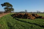 Muck bury in a field near Little Dilwyn