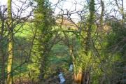 Band of woodland and stream, Bradley Lane