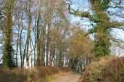 Band of woodland by Bradley Lane