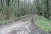 Road through Fryarne Park Wood