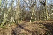 Public Footpath through Hugglets Wood