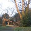 Fallen tree in Maryon Park