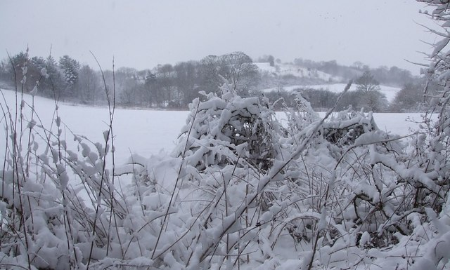 View across snow-covered Dawes Meadow