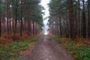 Main Track, Bixley Wood