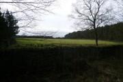 Farley Moor - Field and Woodland