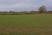 Arable farmland, Adstockfields