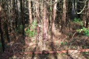 Spot the Bear, Brassetts Wood