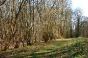 Woodland Boundary, Share Wood