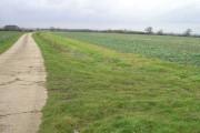 Looking west towards Hawkesden Leys Plantation