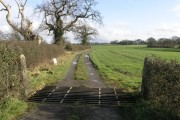 Cattle Grid and Trees