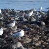 Llanw isel ar draeth Afonwen - Afonwen beach at low tide