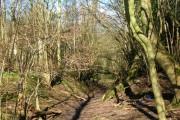 Westenden Wood