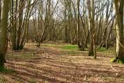 Caldicott's Wood