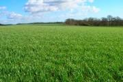 Farmland North of Boggy Wood