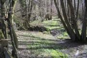 Woodland Glade opposite Stonelands Farm Entrance
