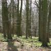 Hill Wood