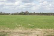 Field at Hawthorn Farm