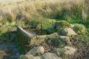 Trough and Tussocks