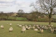 Grazing land, Broomhill Farm