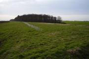 Wood east of Westfield Wood