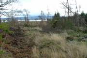 Partly Felled Woodland