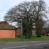 Protected tree, Austin Edwards Drive, Emscote