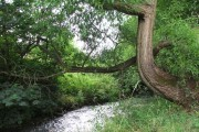 River Drone by Ramshaw Woods, Unstone