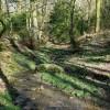 Broomridding Wood
