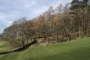 Gap Wood in Dentdale