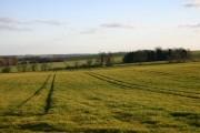 Fields near Poslingford